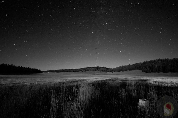 Kaibab National Forest at night
