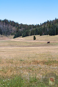 Kaibab National Forest - View from the Kaibab lodge.