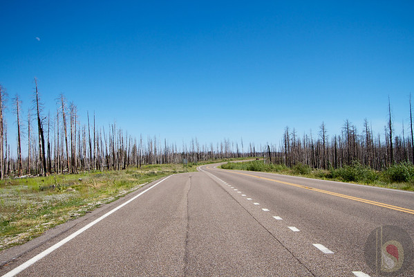 Driving to Kaibab National Forest – Wild fire burned trees