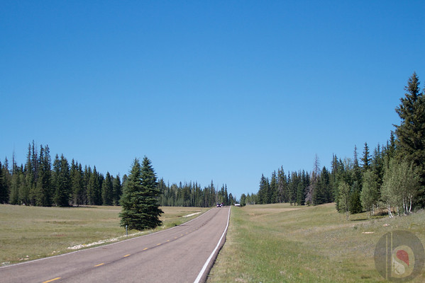 Driving to Kaibab National Forest