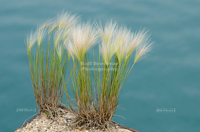 Grass in Buffington Harbor, Gary, Indiana