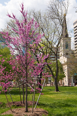 Blooming Tree in Gateway Park