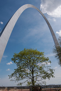 Tree under Gateway Arch
