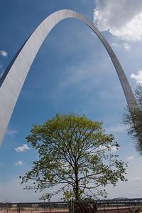 Tree under Gateway Arch