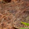 Spider_091909_0001_1