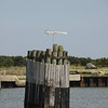 Ocracoke Ferry Dock-06032010-151037