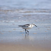 sanderling Rodanthe Ocean at Camp Hatteras_09202009 (35)-1