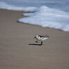 sanderling Rodanthe Ocean at Camp Hatteras_09202009 (20)-1