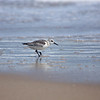 sanderling Rodanthe Ocean at Camp Hatteras_09202009 (30)-1