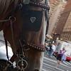 Central Park, NY-08262010-174550(f)