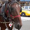 Murphy Central Park, NY-08262010-174512(f)
