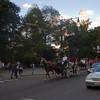 Central Park, NY-08262010-170933(f)