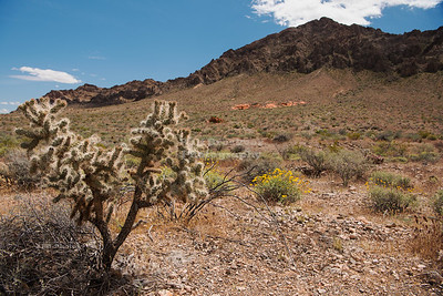 Desert near Valley of Fire State Park, Nevada