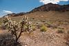 Desert near Valley of Fire State Park, Nevada