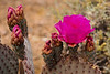 Vibrant cactus at Valley of Fire
