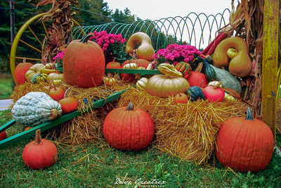 New England pumpkin display