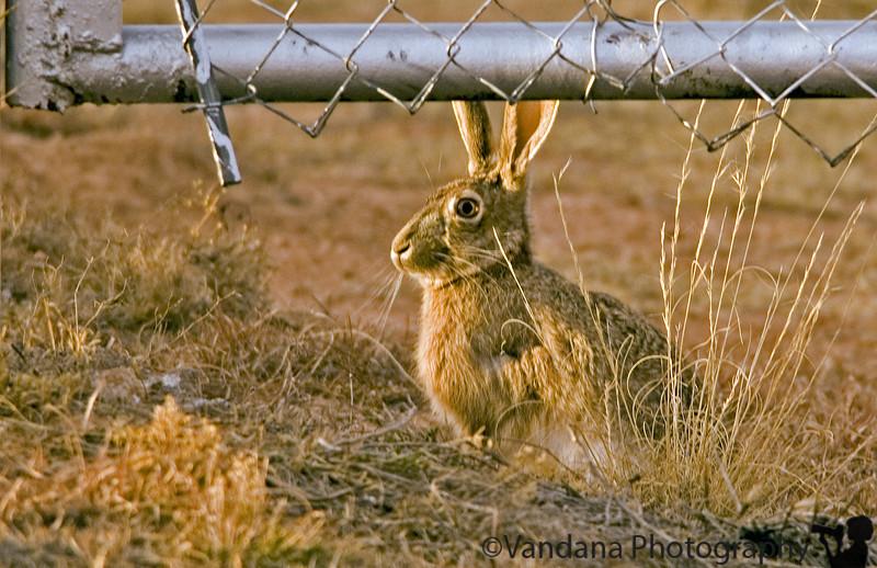 Clovis, New Mexico