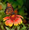 Butterfly pavilion, Albuquerque botanical garden, Albuquerque, New Mexico
