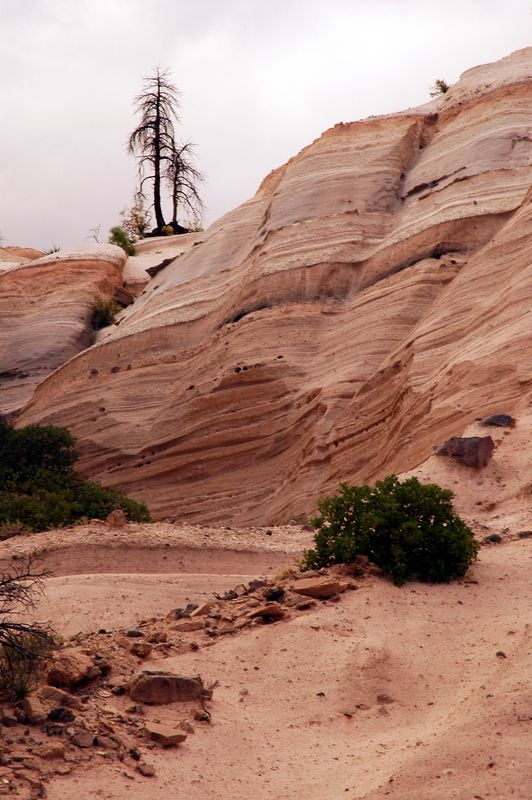 some lonesome trees at Tent rocks