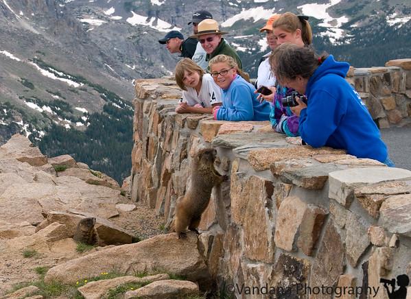 a Marmot amuses us