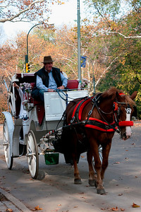 Carriage in Central Park, New York