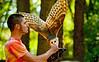 October 3, 2011 - Feeding the barn owl - at a live bird presentation at Carolina Raptor Center