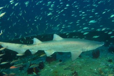 North Carolina Diving