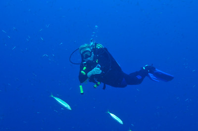 Scuba diver;   25 feet deep, off the coast of North Carolina.  © Joseph W. Dougherty, MD.   All rights reserved.