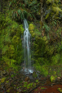 © Joseph Dougherty. All rights reserved.  Small rainwater waterfall in the central Cascades.