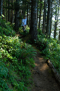 © Joseph Dougherty. All rights reserved.  Beckett running (leaping) down the Coastal Trail in Southern Oregon.