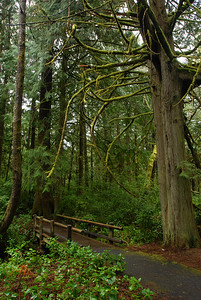 © Joseph Dougherty. All rights reserved.  Moss covered trees and lush vegetation.   Southern Oregon coast.