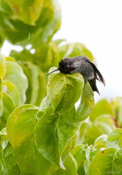 Hummingbird bath 2
