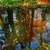 © Joseph Dougherty. All rights reserved.  Fall foliage beside a small pond in southern Oregon.