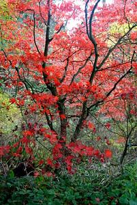 Japanese Gardens, Seattle WA
