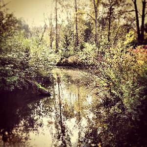 Meadowbrook Pond
