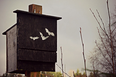Bat Box, Seattle 2013