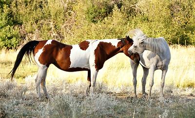 Horses Winthrop, WA 2016