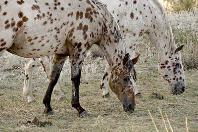 Horses, Mazama WA