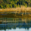 Nisqually Wildlife Refuge in Washington