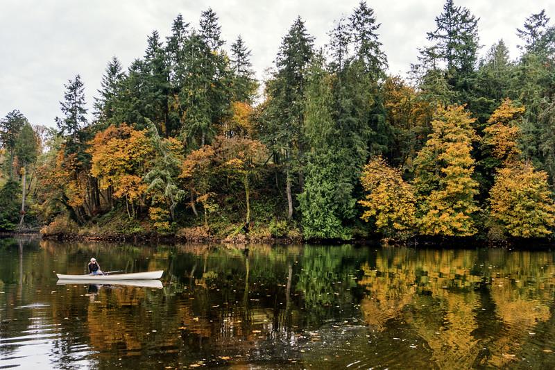 Fall Color in Gig Harbor, Washington