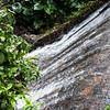 Vereda Trail - El Yunque