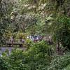Vereda Trail - El Yunque El Yunque