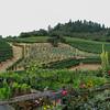 A Rafanelli grapes / olive trees