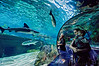 February 21, 2012 - Sense of wonder <br /> <br /> another one from Ripley's aquarium..