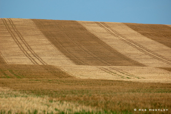 Patterned texture of a wheat field after harvesting.