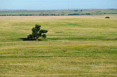 Lonely tree in the prairie near Badlands National Park, South Dakota, USA
