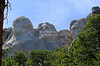 The heads of the four presidents at Mount Rushmore framed by ponderosa pine trees. Mount Rushmore National Memorial, South Dakota, USA