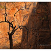 Zion National Park, Southwest Utah, USA Photo-id Utah-183