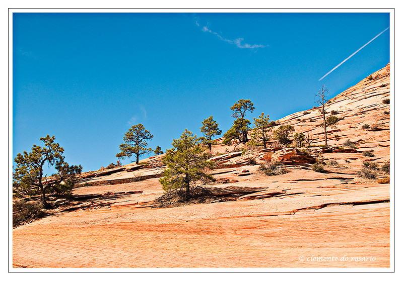 Zion National Park, Southwest Utah,USA Photo-id Utah-0021