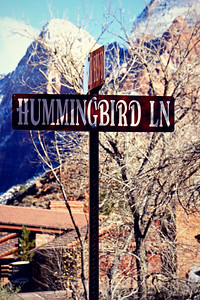 Hummingbird Lane, Utah 2015